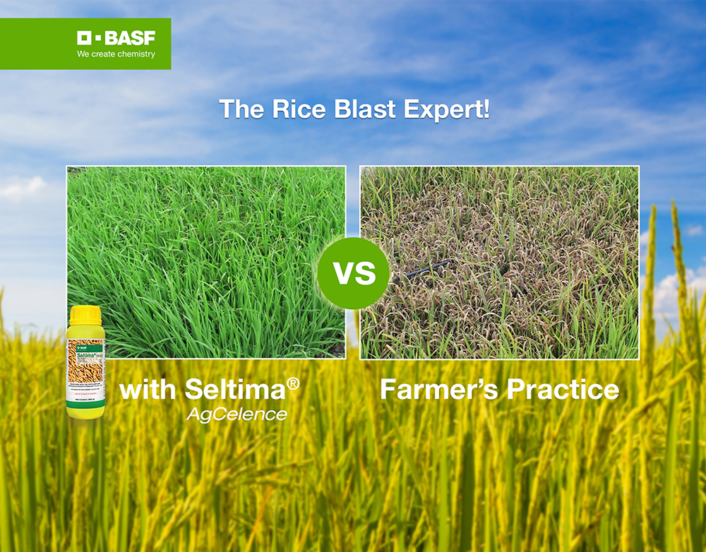 Basf for rice blast